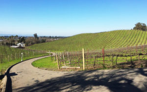 JW_vineyards_01